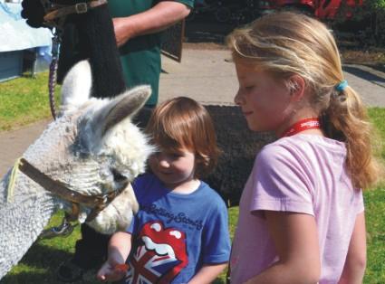 Tiergestützte Therapie Alpaka *.