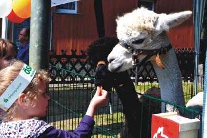Tiergestützte Therapie Alpaka **
