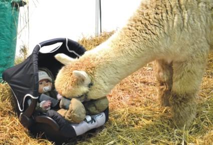 Tiergestützte Therapie Alpaka *